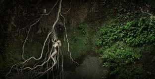Lilith radacini